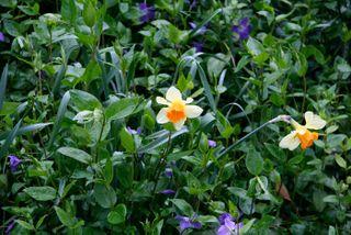 Irish-spring-flowers