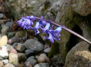Flower-in-rocks