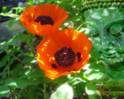 GardenBudha