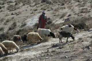 Shepherd-on-hill-in-Jerusalem