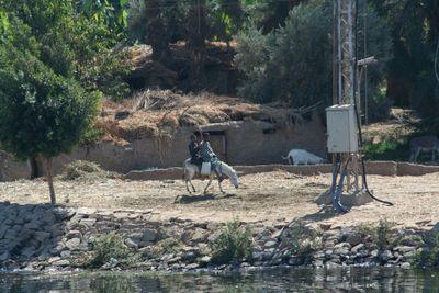 Kids-on-donkey