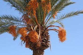 Date tree