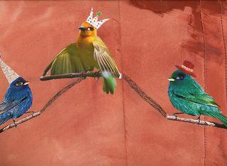 Bird-journal-12