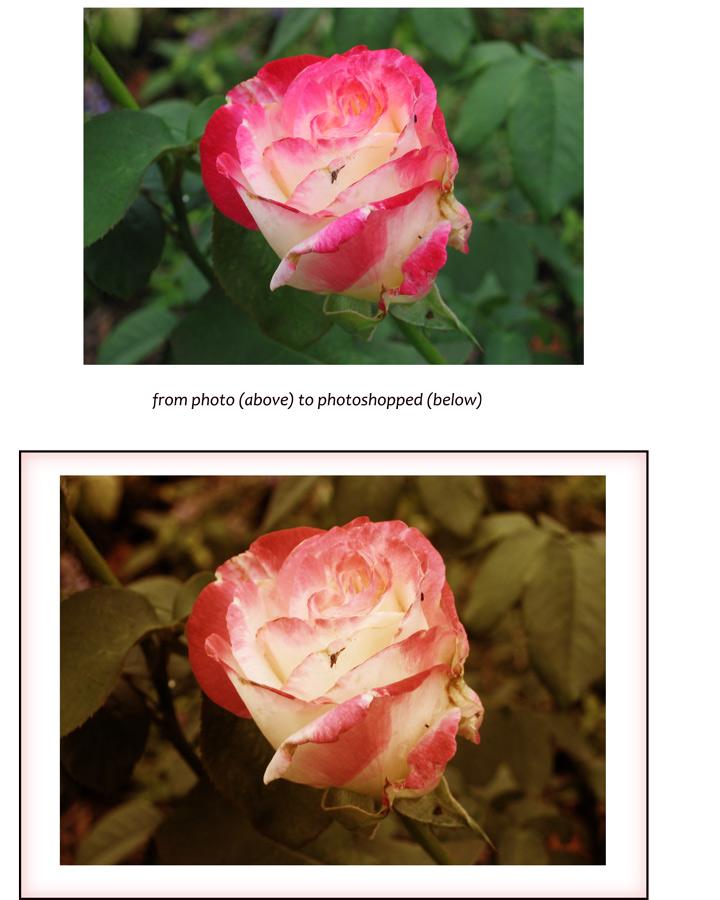 Rose-first-PS-class