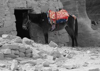 Donkey-selective-b&w