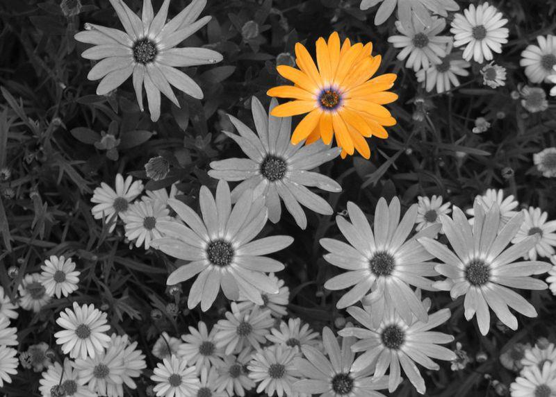 Flowers-selective-b&w