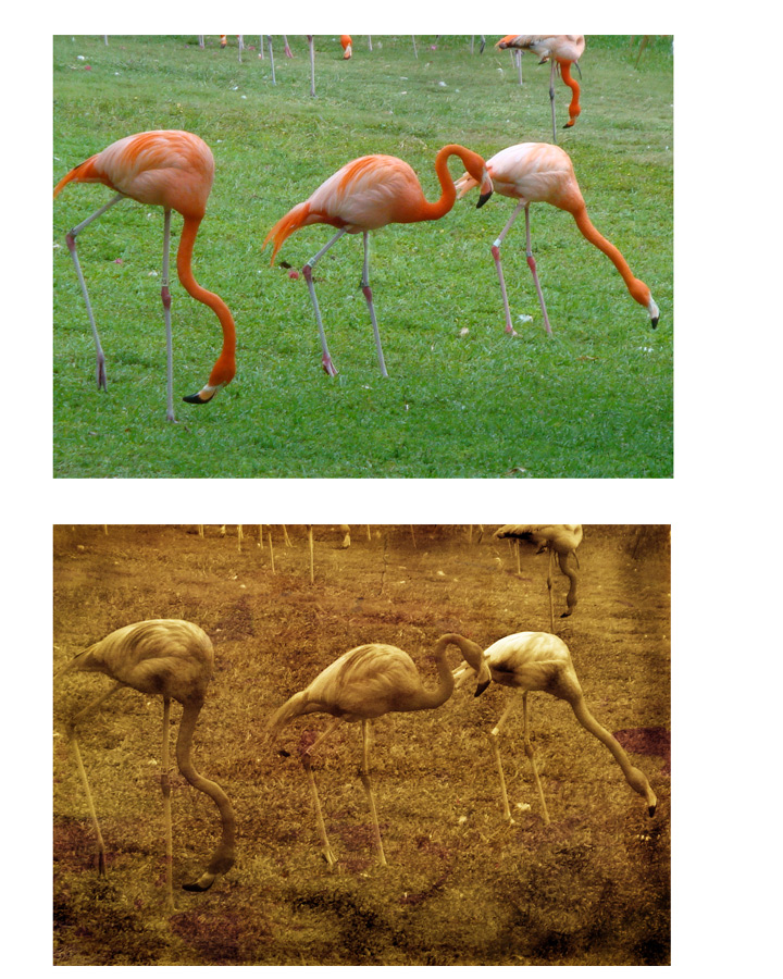 Flamingos-PS-sepia