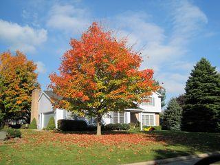 Tree-on-corner