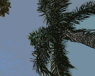 FL-palm-tree