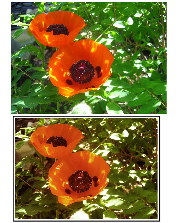 Poppies-first-PS-class-exercise