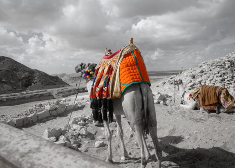 2-camels