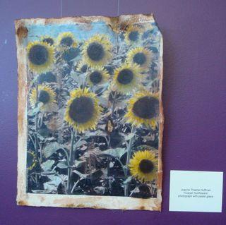 Tuscan-sunflowers
