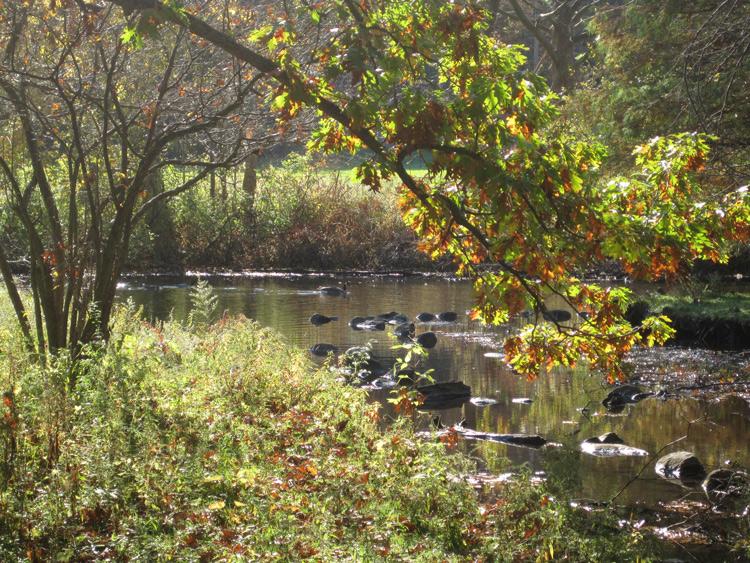 Milham-park-2