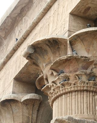 Egyptian-column-with-pigeons