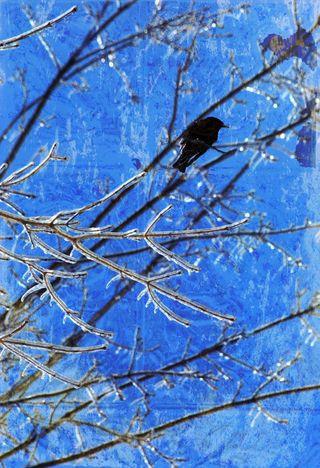 Bird-in-ice-tree