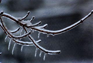 Ice-branch-2