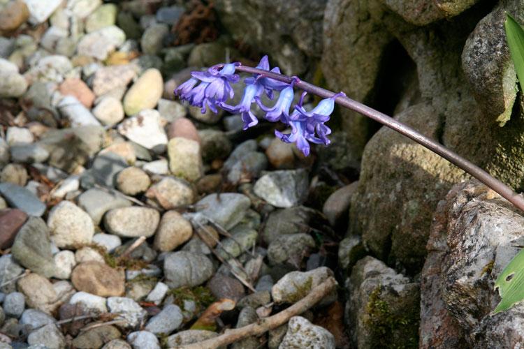 Spring-flower-photo