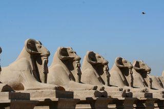 Egyptian-rams