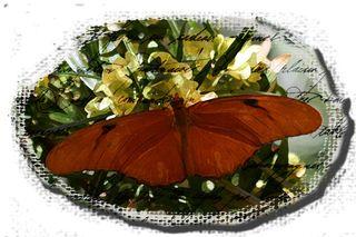 Phoenix-butterfly1