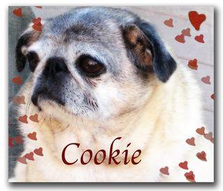 Cookie-PMA-exercise-8