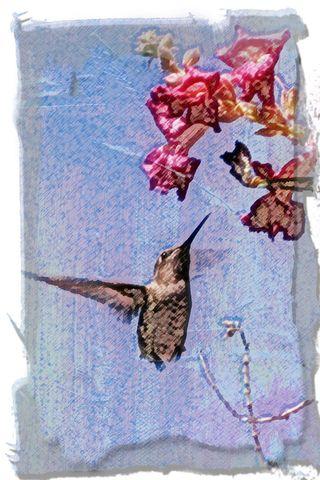 Phoenix-humminbird