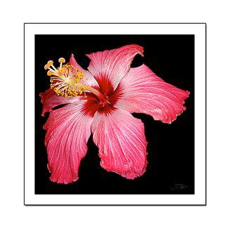 Flower-1.3