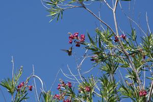 Hummingbird-photo