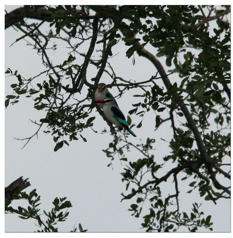2-birds-in-tree-Kapama-River-Lodge