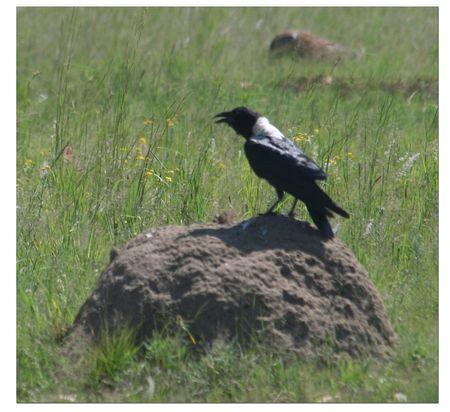 Bird-on-termite-mound