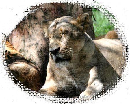 White-lioness