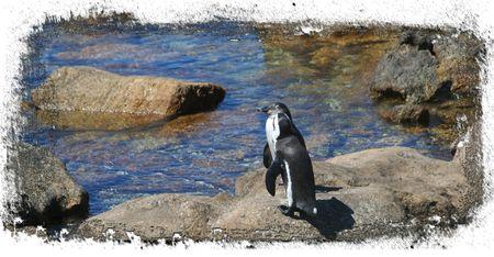 2-penguins-on-rock
