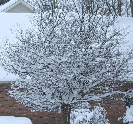 Jan-2012-snow-storm