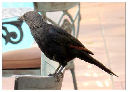 Bird-at-Portswood-hotel