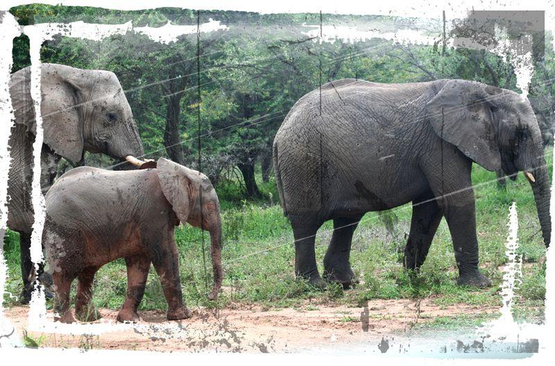 Elephant-family-1