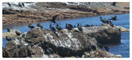 Cape-of-Good-Hope-Birds