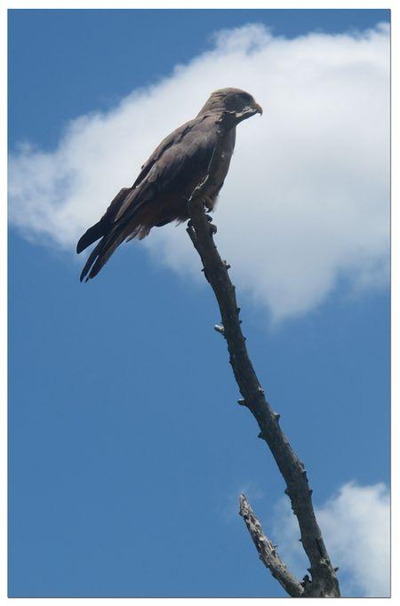 Bird-on-stick-branch