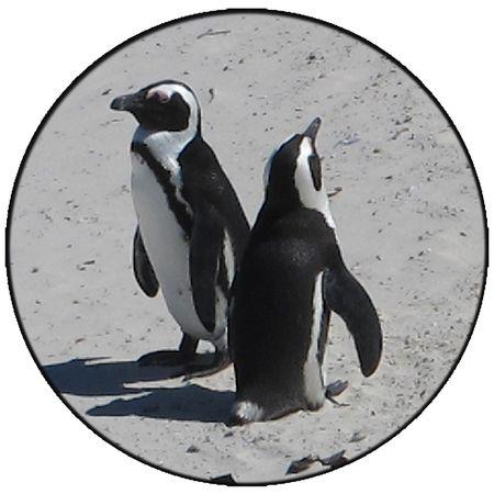 Doso-do-penguins