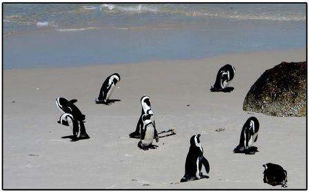 Penguins-on-beach-2