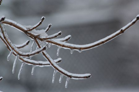 Icy-branch