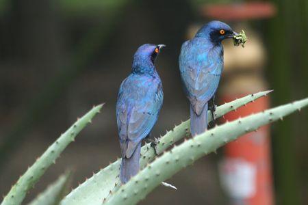 Birds-before