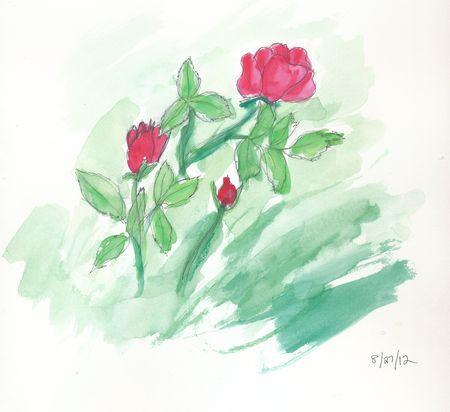 Roses-in-garden