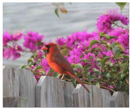 Cardinal-at-Al's-2a