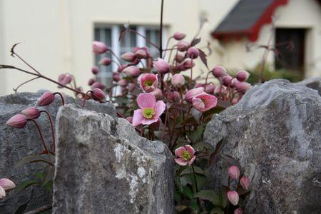 Irish-flowers