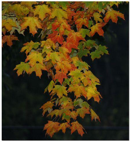 Backyard-leaves