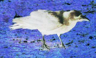 Nagasaki-bird-2a-invert