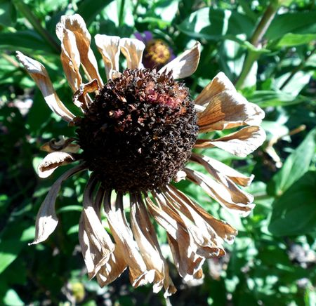 Orvieto-convent-garden-dead-flower