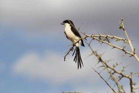 Tarangire-bird-2
