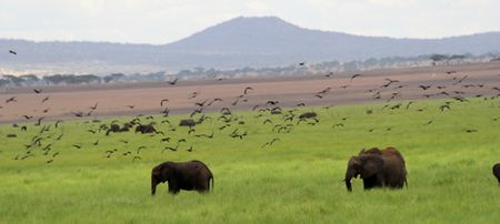 Tarangire-swamp-elephants-&-birds