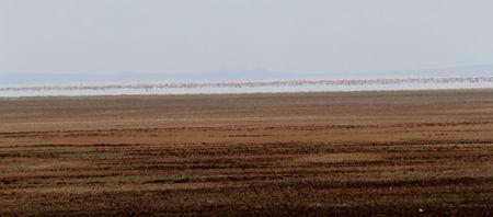 Lake-Manyara-flamingos