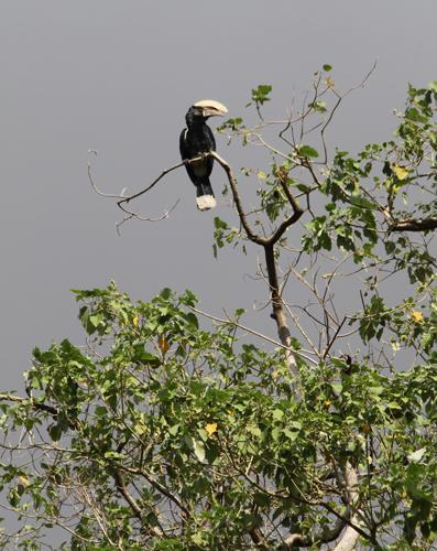 Lake-Manyara-bird-1